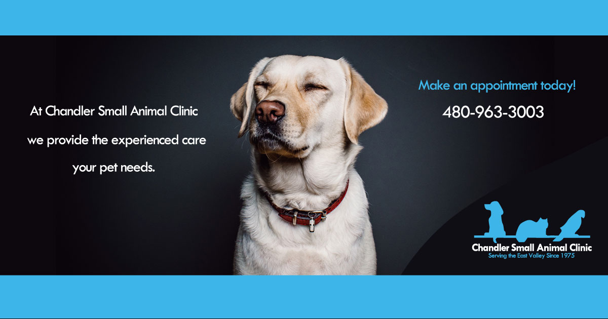 Chandler AZ Veterinarian | Animal Hospital | Cat and Dog Boarding