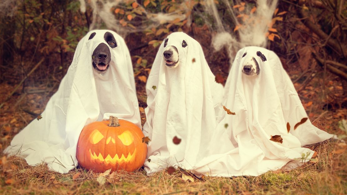 Halloween Pet Health Tips